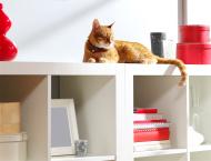 Mieszkanie przyjazne kotu